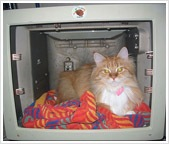 Jellybean enjoying his new sleeping quarters