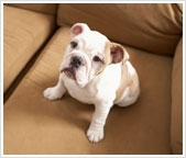 Pet stains on your carpet