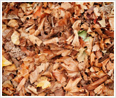 How to Remove Fallen Leaves from Your Garden