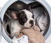 Don't Fear a Dirty Washing Machine