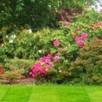 10 Easy Tips to Help You Achieve a Neat Garden