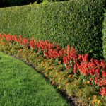 How To Select the Right Hedge Trimmer For The Perfect Cut