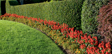 Selecting the Right Hedge Trimmer