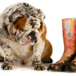 Easy Ways to Remove Pet Stains…Without Chemicals