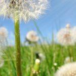 Weed It & Reap – Tips To Make Weeding Easier