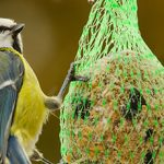 How to Encourage Birds and Bees Into Your Garden