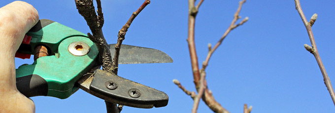 Pruning A Winter Branch