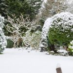Are you Sadly Neglecting Your Winter Garden?