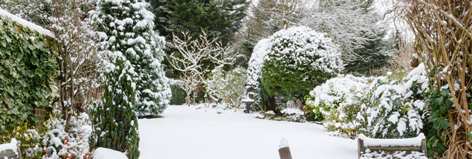 Snowy Back Garden In Winter