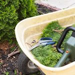 Why You Should Definitely Trim Your Hedge This Month