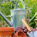 Top 10 Gardening Tips to do this Spring