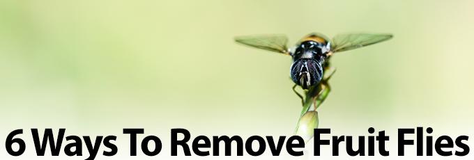 Fruit Flies Cover Photo