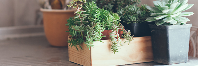 Plants In Kitchen Potted