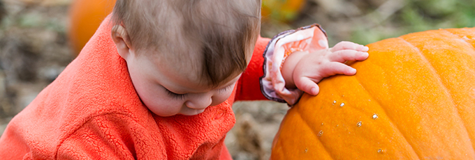 Small Girl In Pumpkin Patch