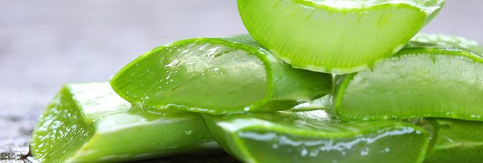 Aloe Vera Inside Leaves