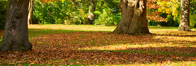 Kew Gardens Park Autumn