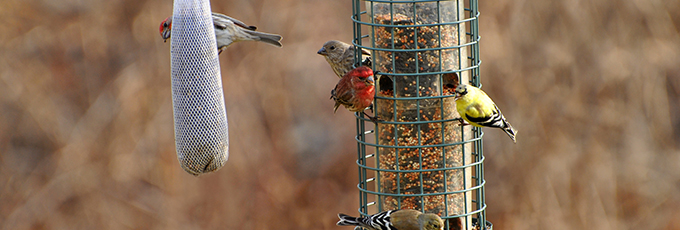 Busy Bird Feeder In Garden