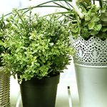 5 of the best air-filtering houseplants