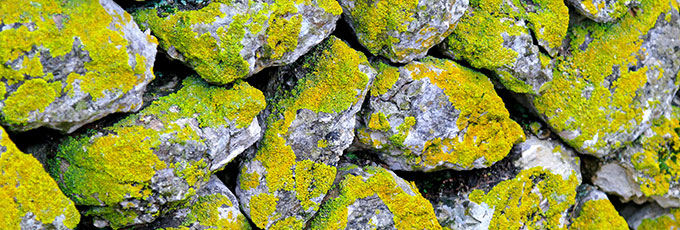 Wabi-sabi moss covered stones