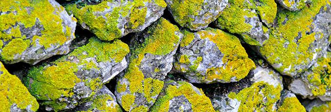 Wabi-sabi moss covered stones