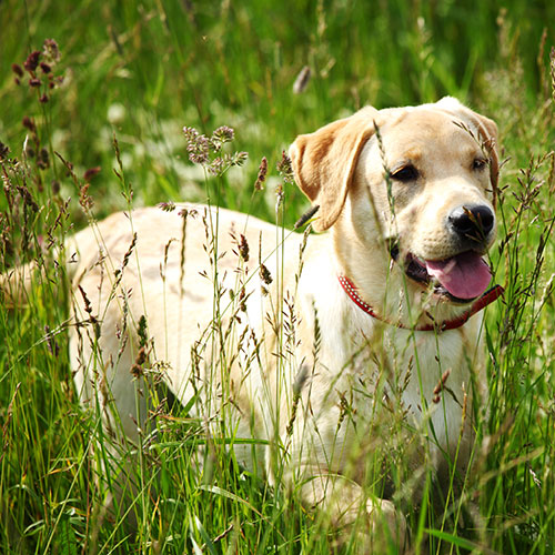 Dog walking in the grass