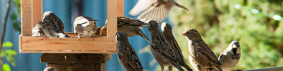 Birds at bird house in garden
