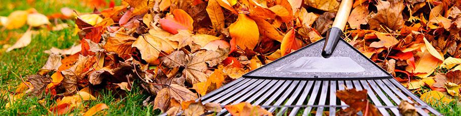 Raking autumn leaves