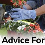 How To Improve Your Gardening Skills