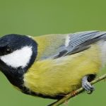 How to Invite and Care for Friendly Garden Guests