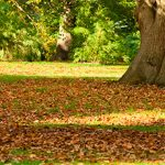 How To Attract Wildlife To Your Garden In Autumn