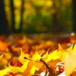 Get your home autumn ready